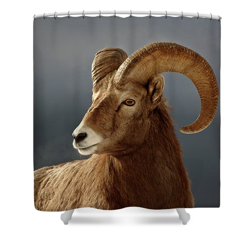 Rocky Mountain Shower Curtain featuring the digital art Bighorn Sheep In Winter by Mark Duffy