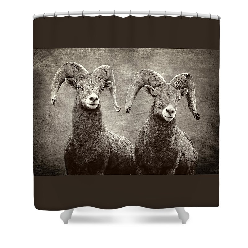 Bighorns Shower Curtain featuring the photograph Bighorns by Wes and Dotty Weber