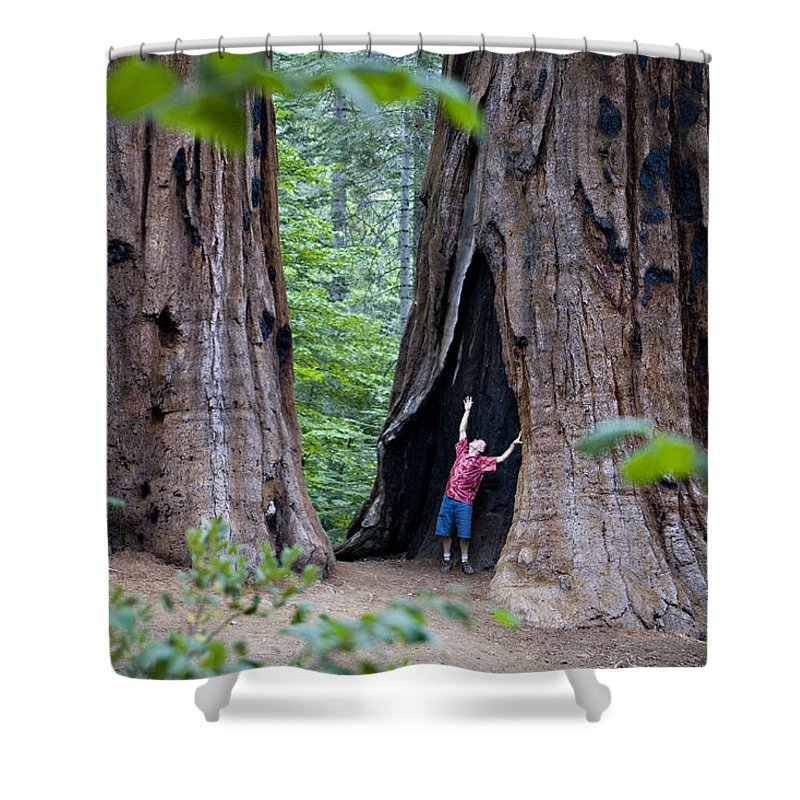 One Person Shower Curtain featuring the photograph Bill Looking Up At The Sequioas Trees by Dawn Kish