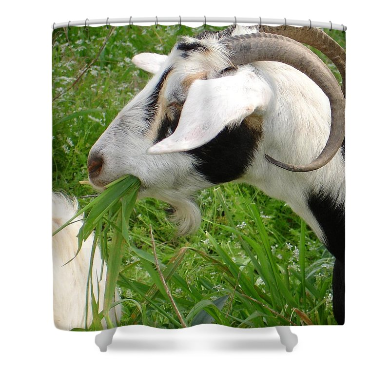 Goat Shower Curtain featuring the photograph Billy Goat Horns by Taiche Acrylic Art