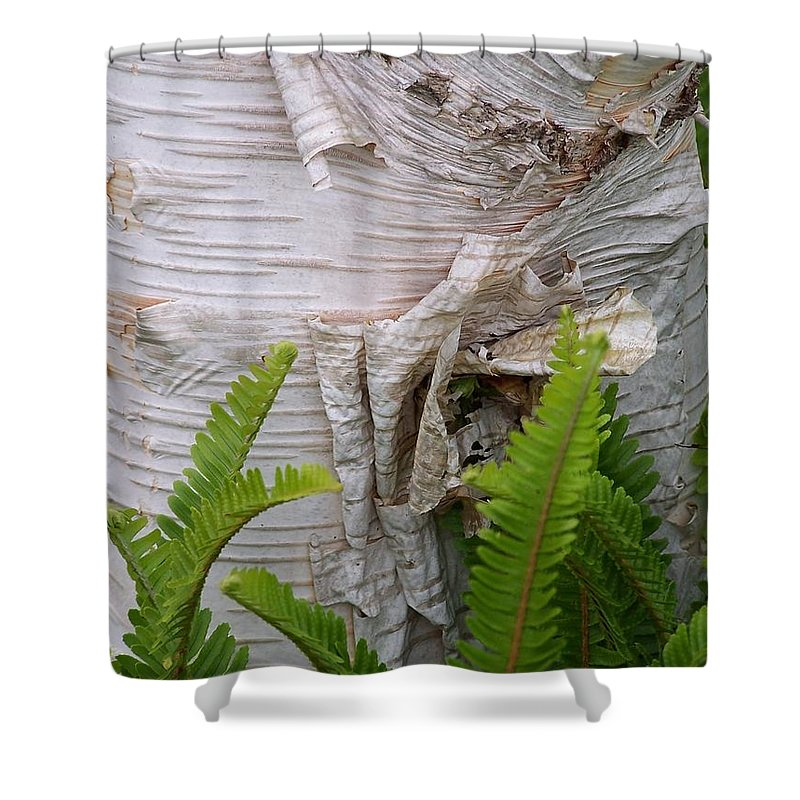 Tree Shower Curtain featuring the photograph Birch Fern by Gale Cochran-Smith