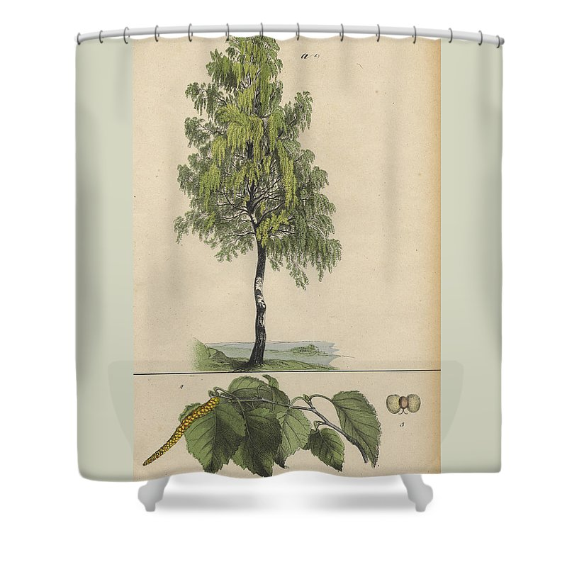 Birch Shower Curtain Featuring The Drawing Tree By German Botanical Artist