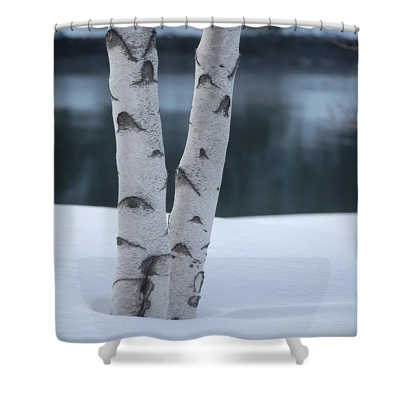 Birch Shower Curtain featuring the photograph Birch Twins In Snow by Faith Harron Boudreau