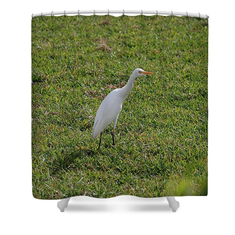 White Bird Shower Curtain featuring the photograph Bird Is The Word by Rob Hans