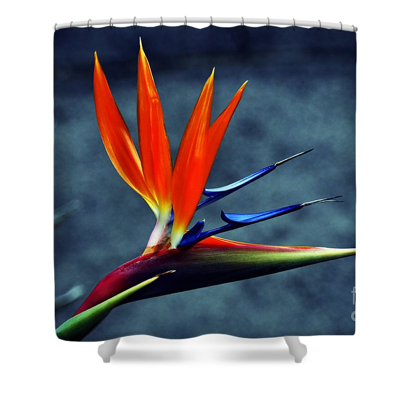 Clay Shower Curtain featuring the photograph Bird Of Paradise by Clayton Bruster