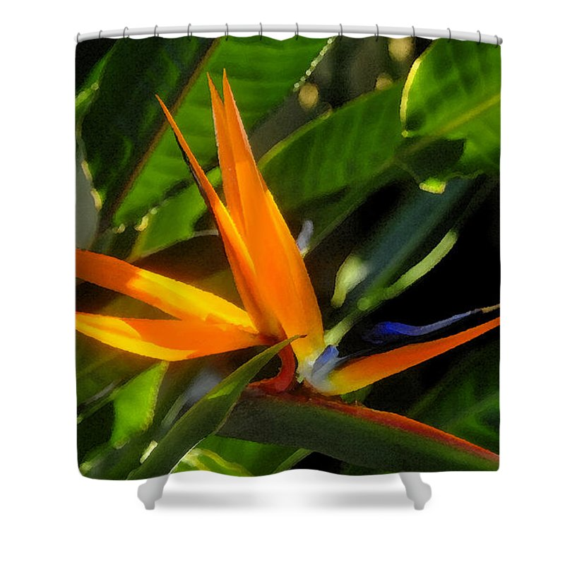 Bird Of Paradise Shower Curtain featuring the painting Bird Of Paradise by David Lee Thompson
