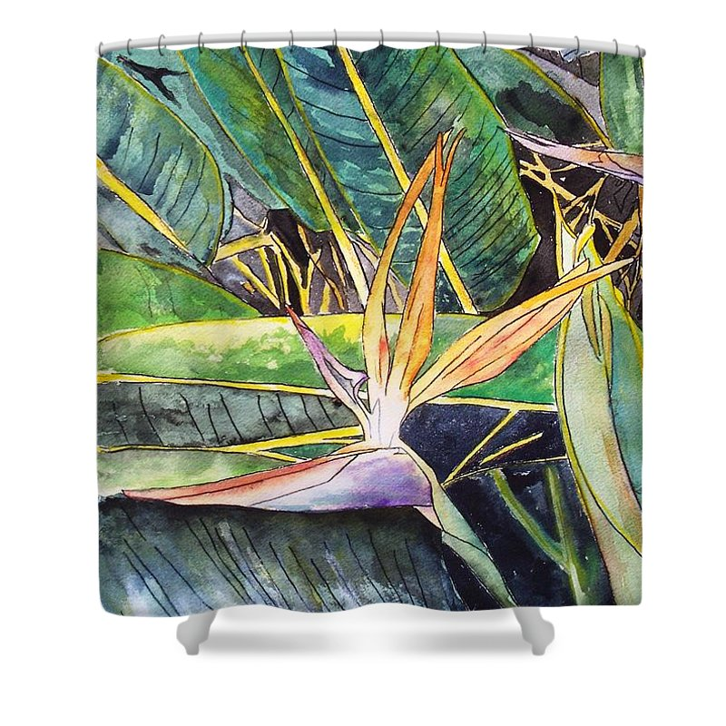 Watercolor Shower Curtain featuring the painting Bird Of Paradise by Derek Mccrea