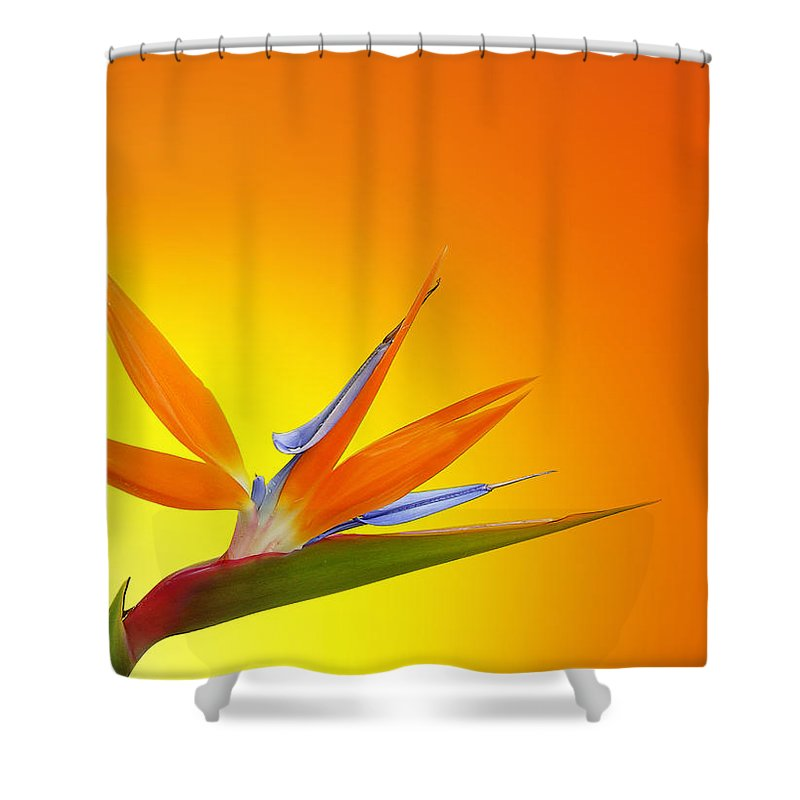 Bird Of Paradise Orange Shower Curtain For Sale By Mark Rogan