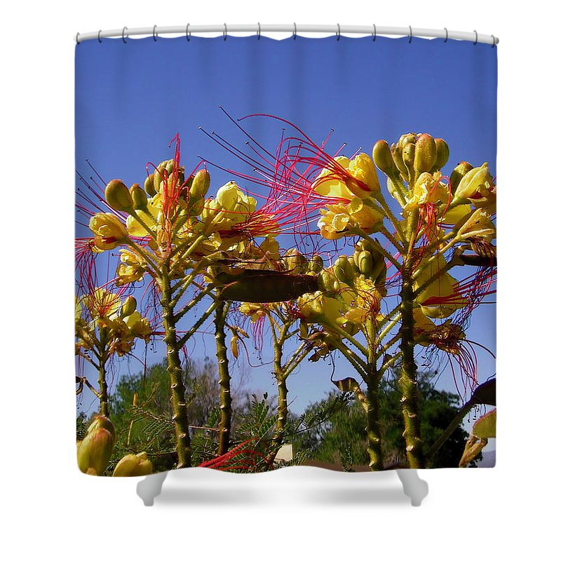 Flowers Shower Curtain featuring the photograph Bird Of Paradise Shrub by Stephanie Moore