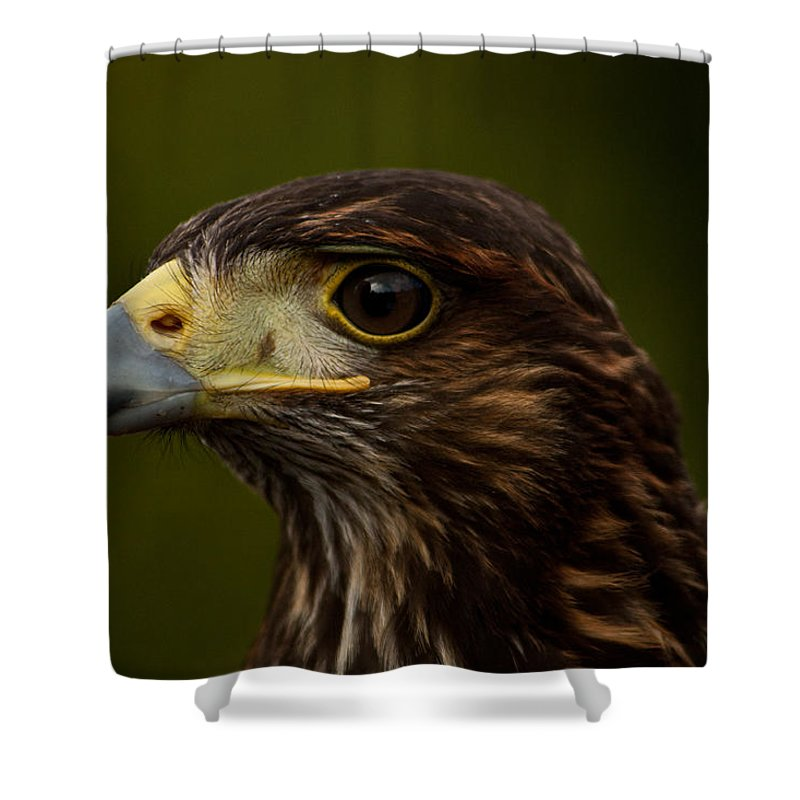 Bird Shower Curtain featuring the photograph Bird Of Prey by Dawn OConnor