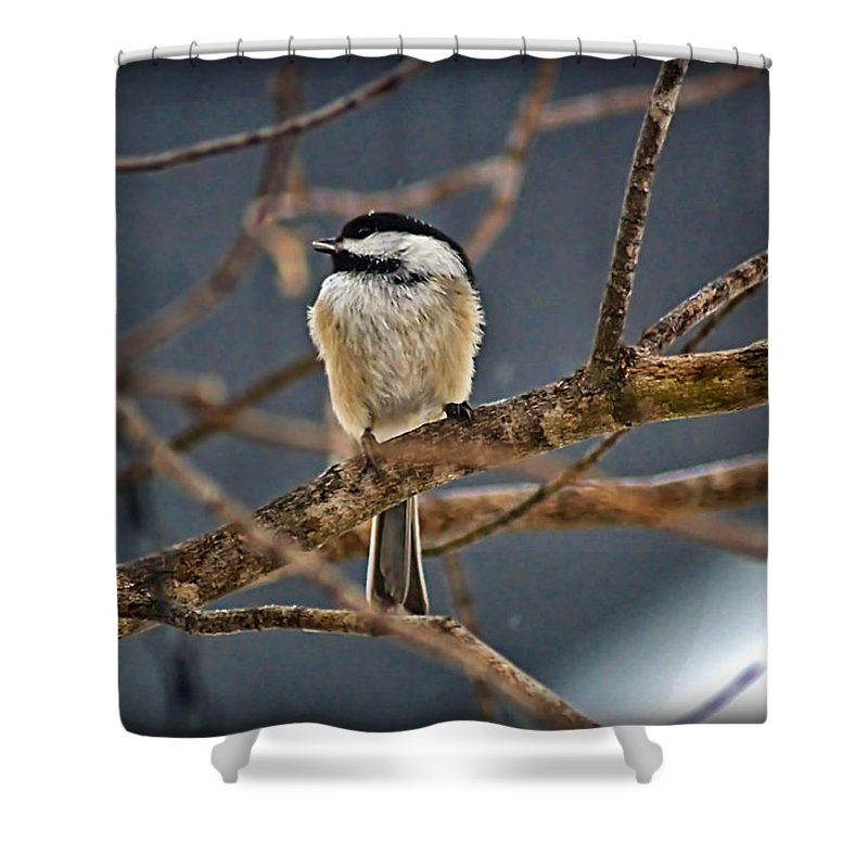 Alone Shower Curtain featuring the photograph Bird Song by Catherine Melvin