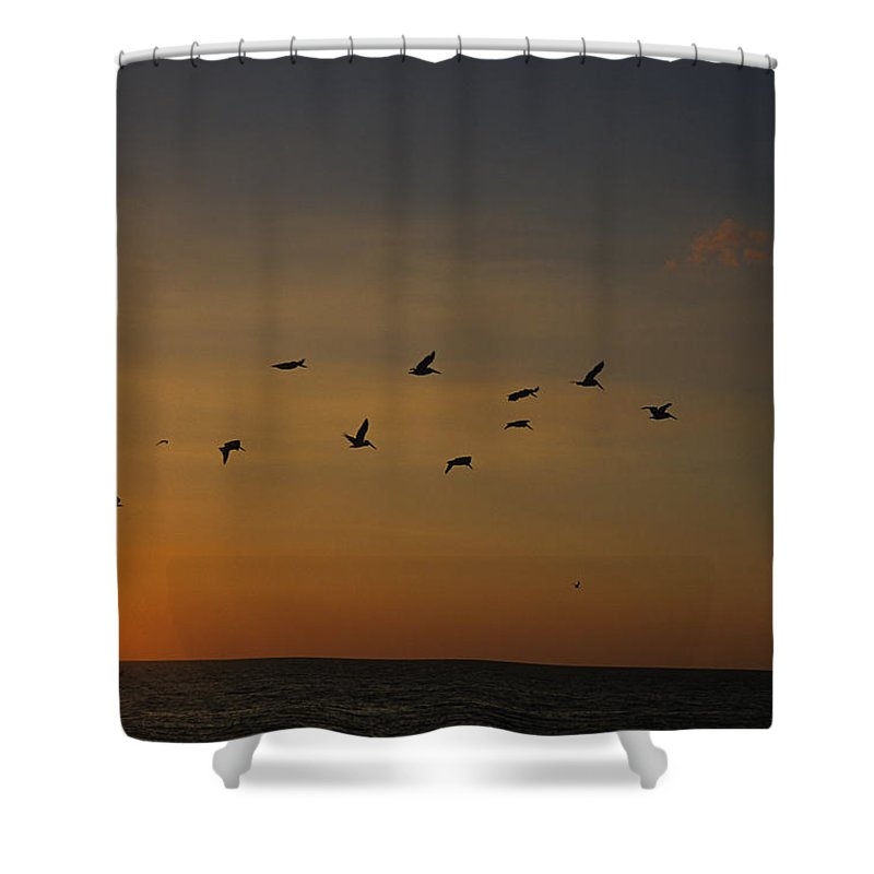 Holmes Beach Shower Curtain featuring the photograph Birds Fly Into The Wind Above The Gulf by Stacy Gold