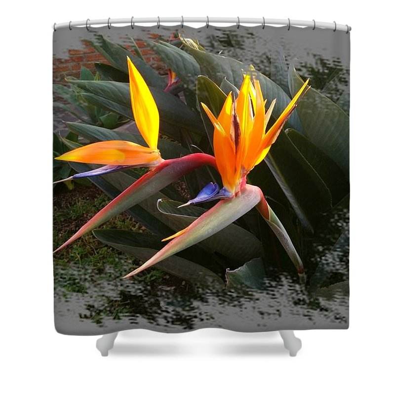 Bird Of Paradise Shower Curtain featuring the digital art Birds Of Paradise by Max DeBeeson