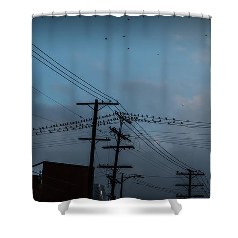 Iphone Cover Shower Curtain featuring the photograph Los Angeles Birds On A Wire by Ralph King