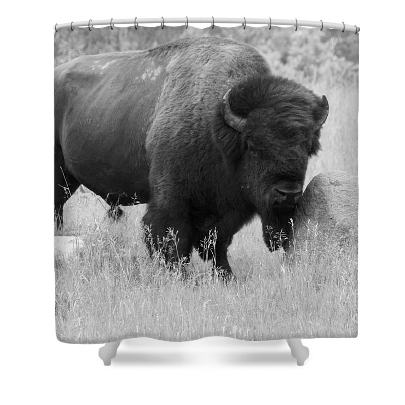 Animal Shower Curtain featuring the photograph Bison And Buffalo by Mary Mikawoz