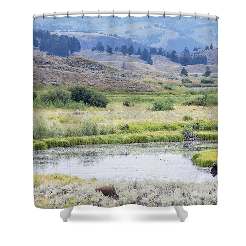 Bison Shower Curtain featuring the photograph Bison At Slough Creek by Carolyn Fox