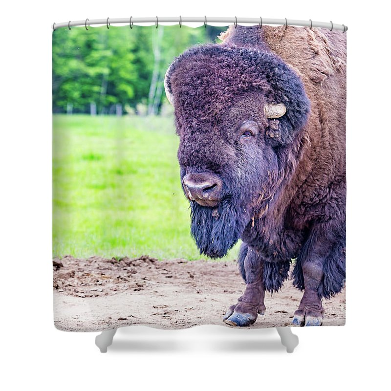 Bisons Shower Curtain featuring the photograph Bison by Csaba Demzse