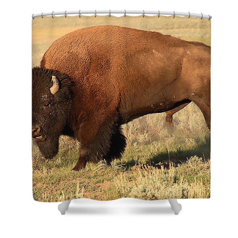 Bison Shower Curtain featuring the photograph Bison Huffing And Puffing For Herd by Max Allen