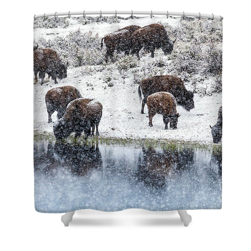 Bison Shower Curtain featuring the photograph Bison Snow Reflecton by Daryl L Hunter