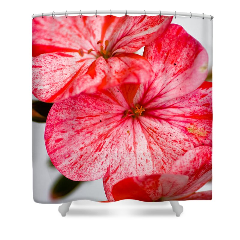 Bizzy Lizzy Shower Curtain featuring the photograph Bizzy Lizzy by Brian Roscorla
