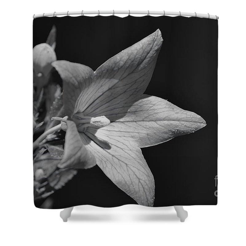 Black Shower Curtain featuring the photograph Black And White by Anita Goel
