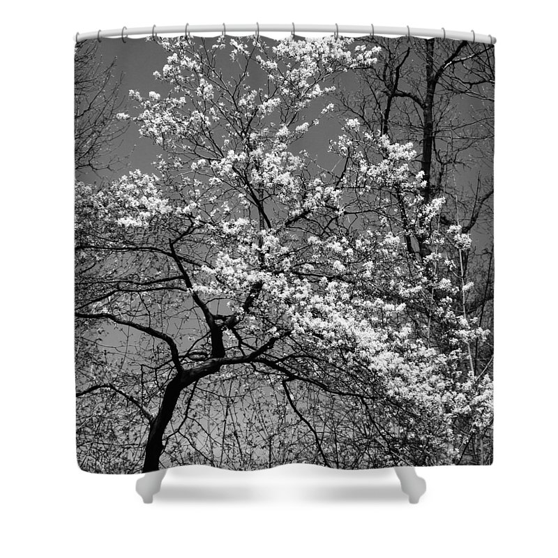 Tree Shower Curtain featuring the photograph Black And White Blossoms by Phill Doherty