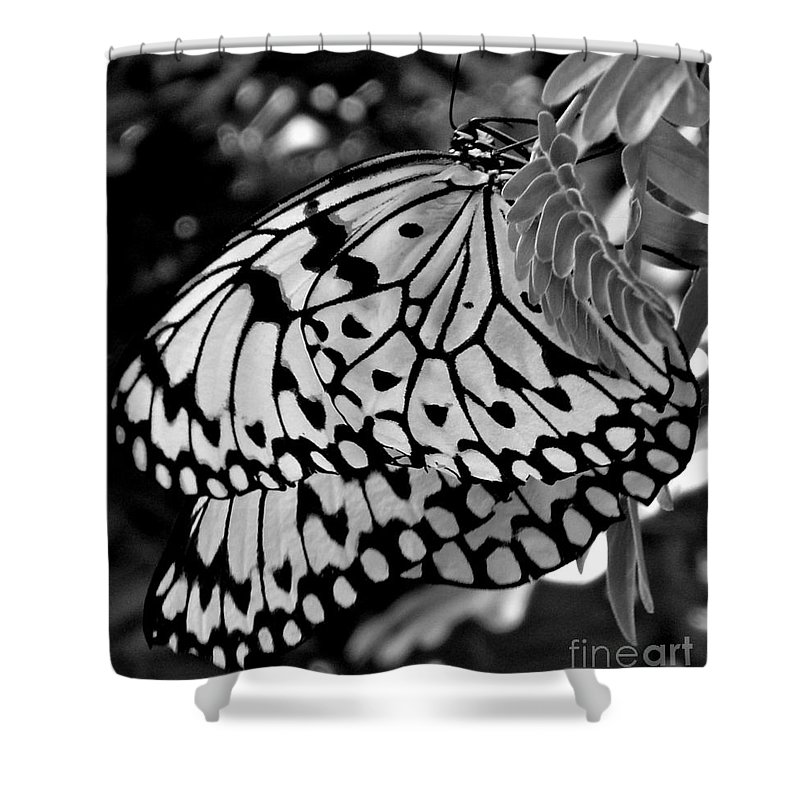 Photograph Shower Curtain featuring the photograph Black And White Butterfly by Shelley Jones