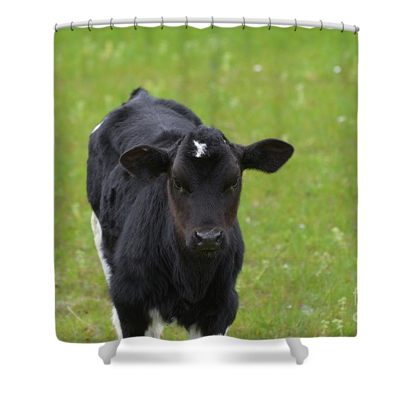 Calf Shower Curtain featuring the photograph Black And White Calf Standing In A Field by DejaVu Designs