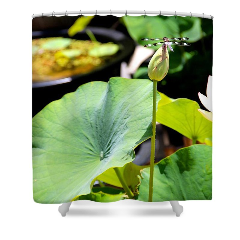 Insect Shower Curtain featuring the photograph Black And White Dragonfly On A Lotus Bud by Deanne Rotta
