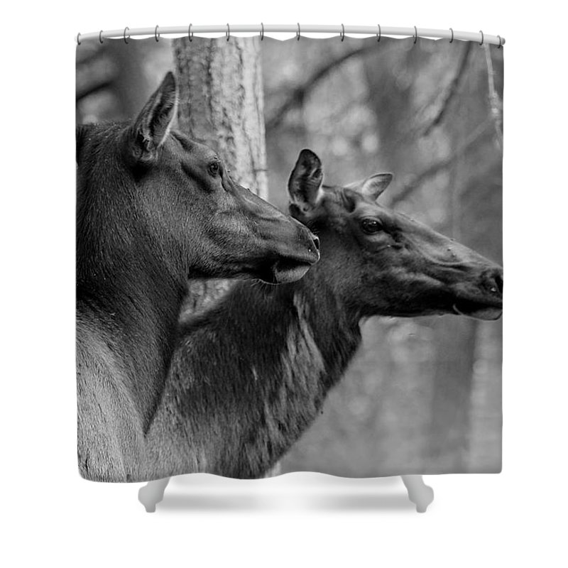 Black And White Shower Curtain featuring the photograph Black And White Elk by Steve McKinzie