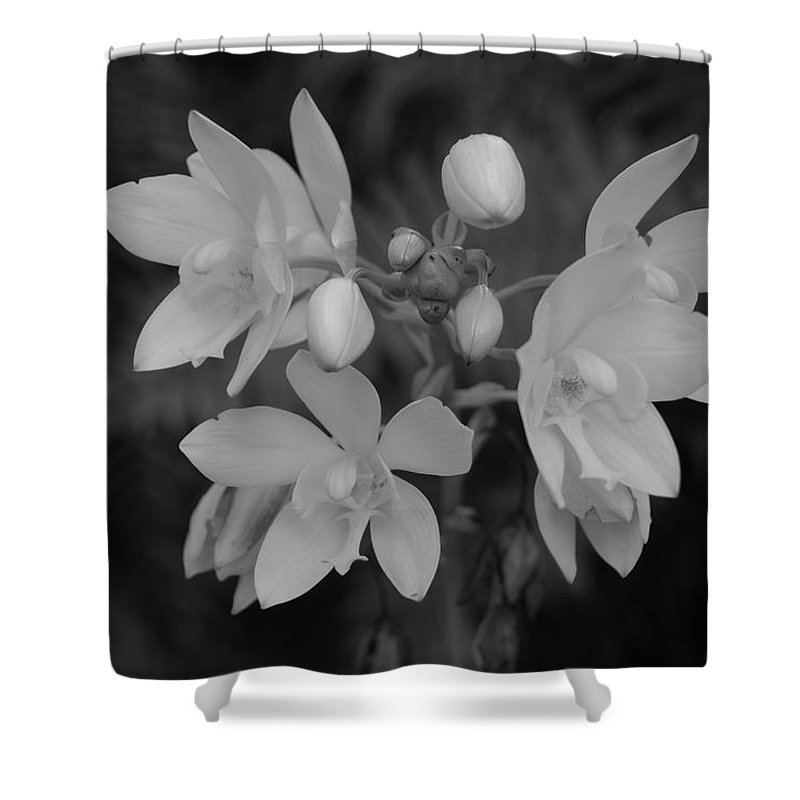 Macro Shower Curtain featuring the photograph Black And White Flower by Rob Hans