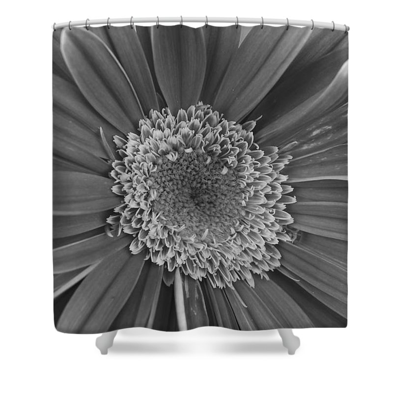 Flower Shower Curtain featuring the photograph Black And White Gerber Daisy 4 by Amy Fose