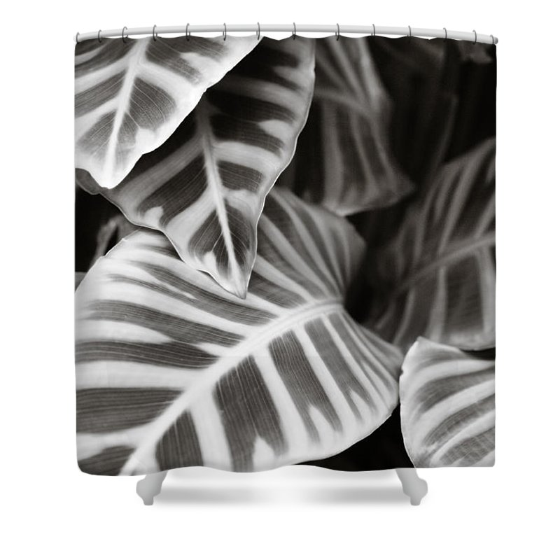 Black Shower Curtain featuring the photograph Black And White Leaves by Marilyn Hunt