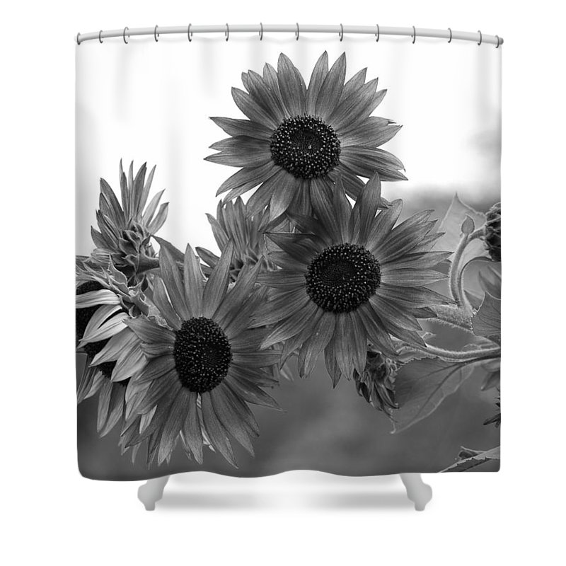 Flower Shower Curtain featuring the photograph Black And White Sunflowers by Amy Fose