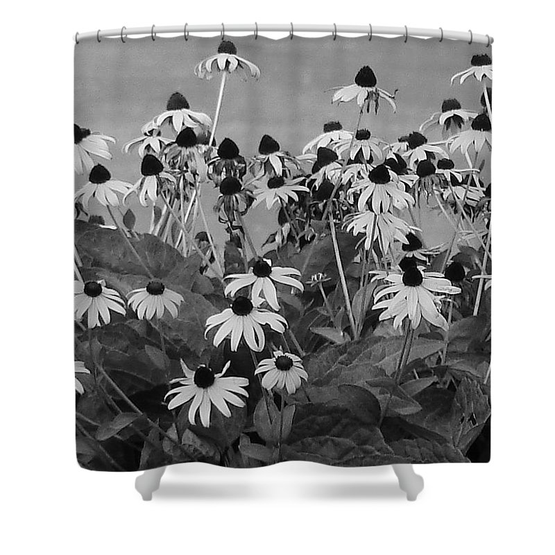Shower Curtain featuring the photograph Black And White Susans by Luciana Seymour