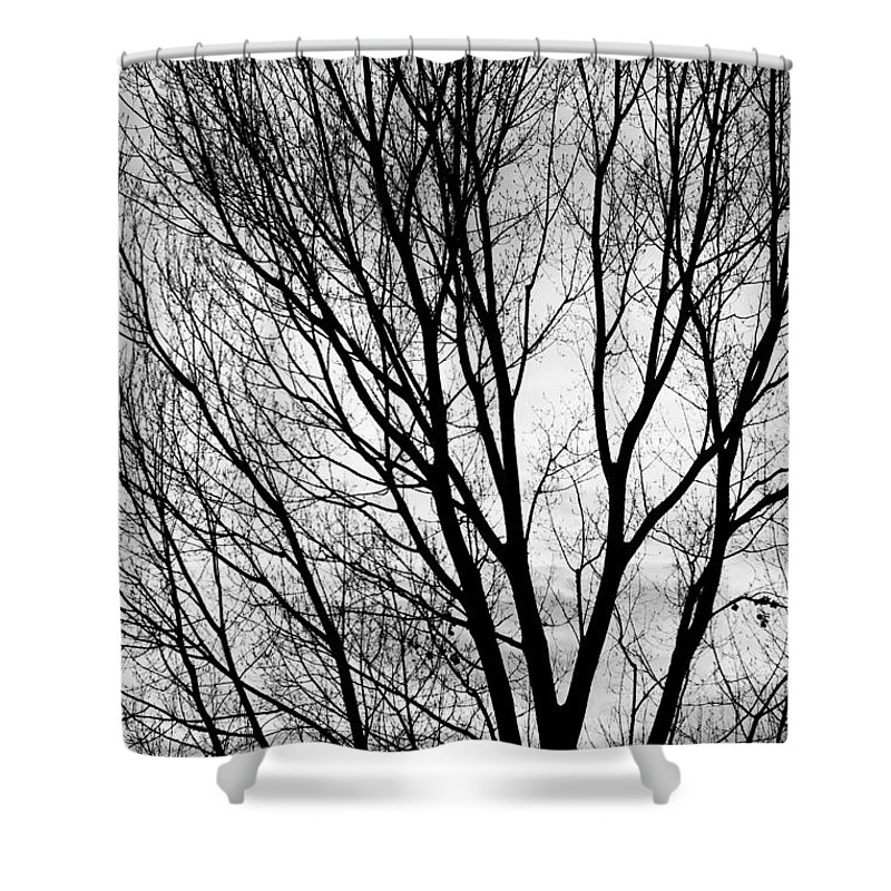 Black And White Tree Branches Silhouette Shower Curtain For Sale By