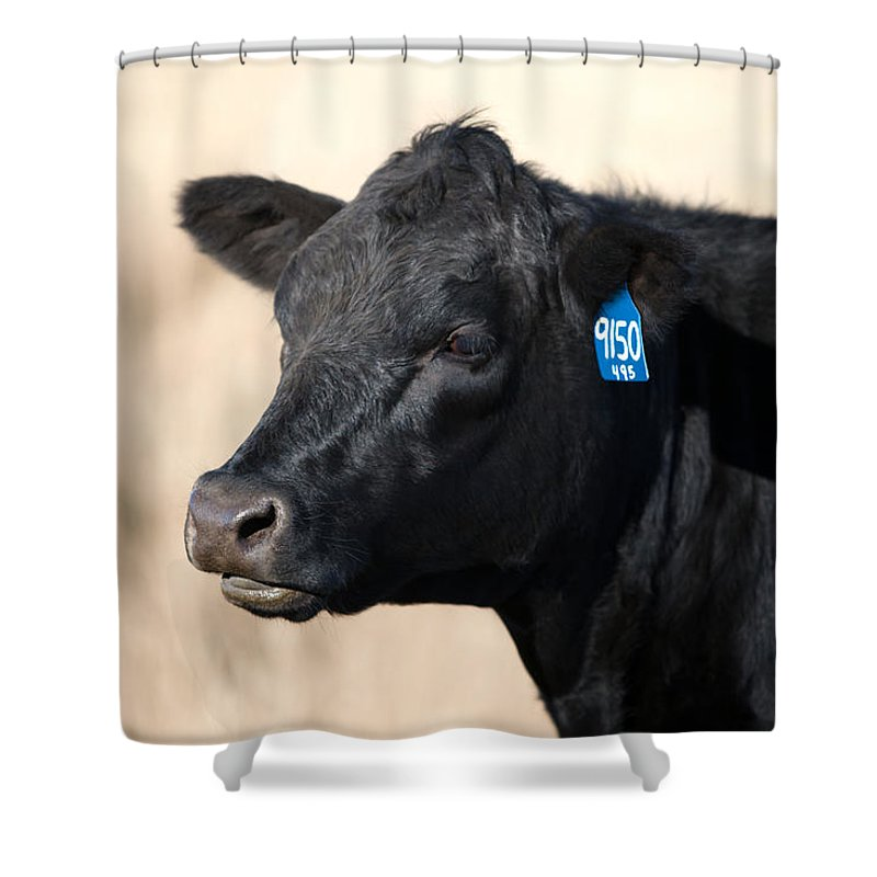 Black Angus Shower Curtain Featuring The Photograph Cow By Todd Klassy