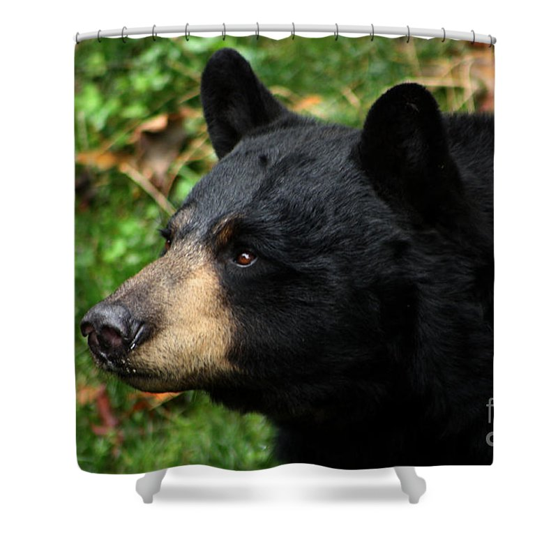 Black Bear Shower Curtain Featuring The Photograph Profile By Nick Gustafson