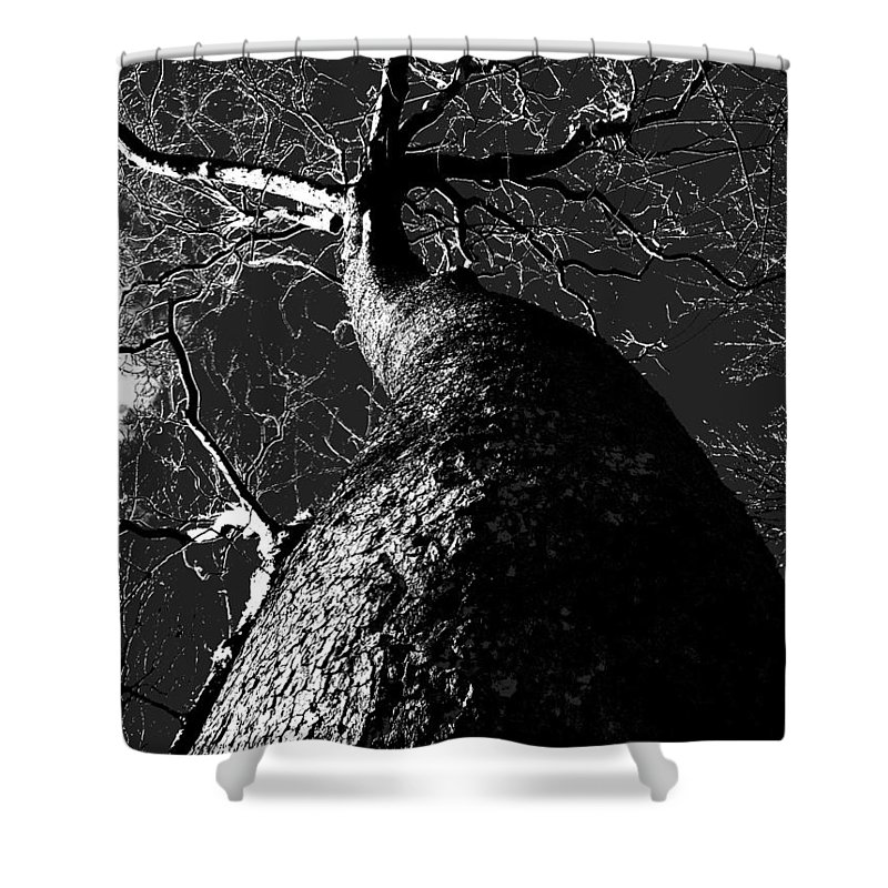 Black Beauty Shower Curtain featuring the photograph Black Beauty by Ed Smith