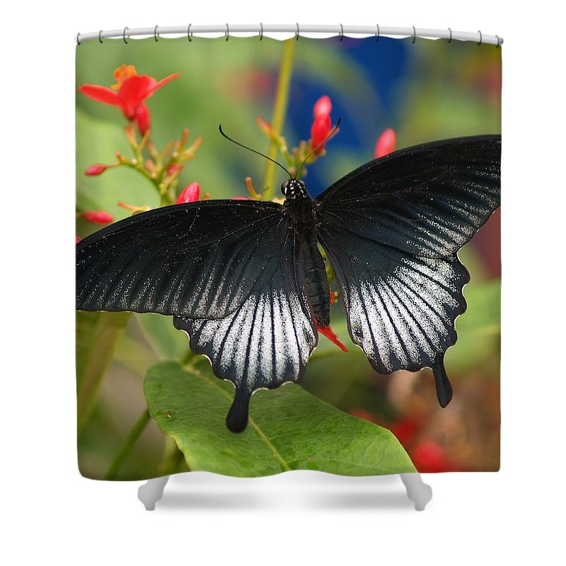 Butterfly Shower Curtain featuring the photograph Black Beauty by Gaby Swanson