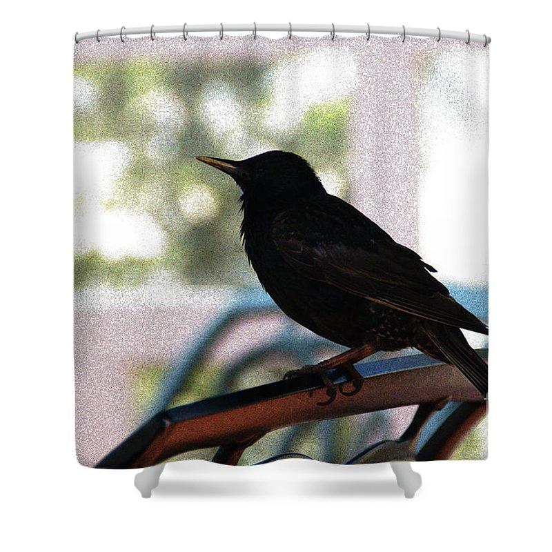 Black Bird Shower Curtain featuring the photograph Black Bird by Linda Shafer