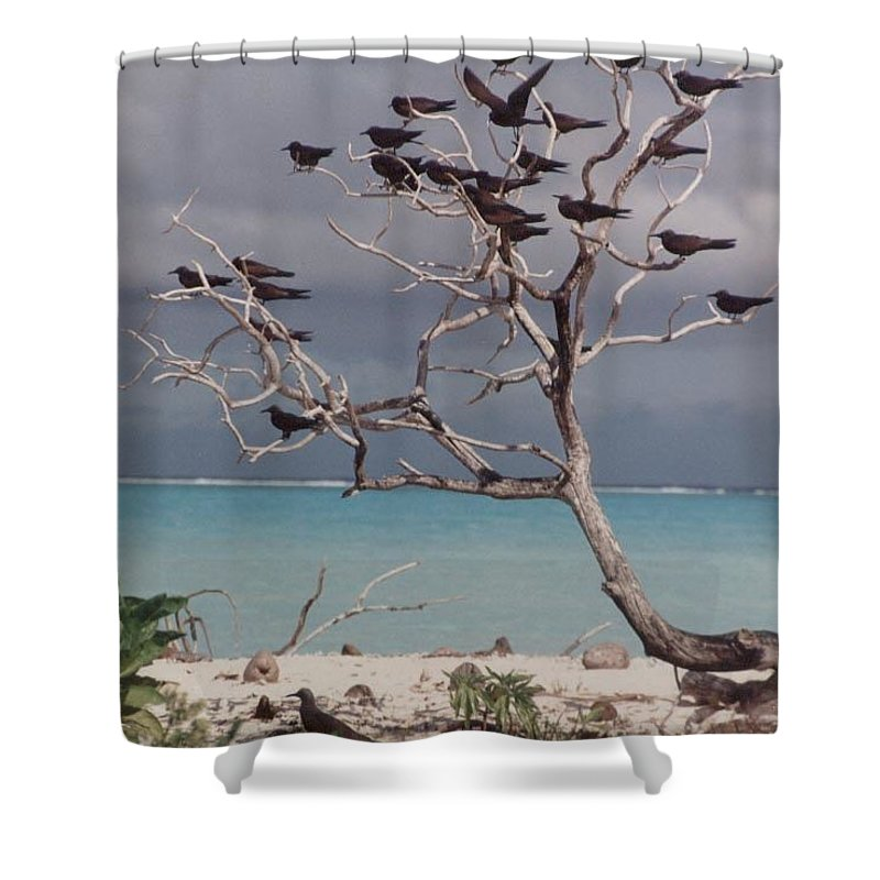 Charity Shower Curtain featuring the photograph Black Birds by Mary-Lee Sanders