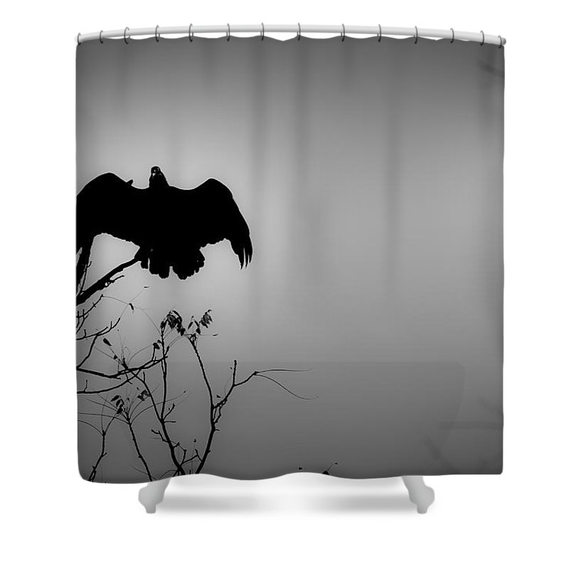 Black Shower Curtain featuring the photograph Black Buzzard 2 by Teresa Mucha