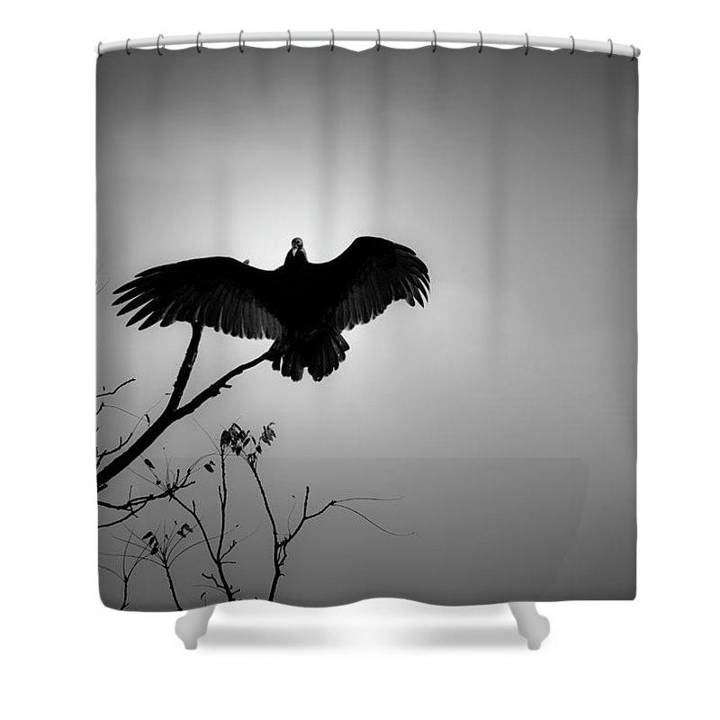 Black Shower Curtain featuring the photograph Black Buzzard 5 by Teresa Mucha