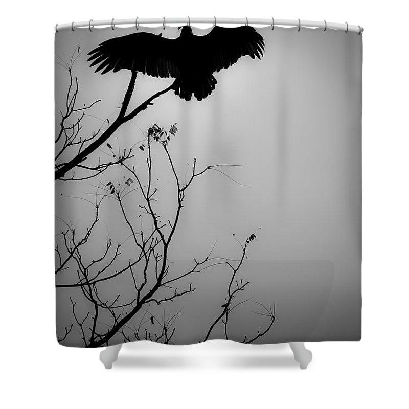 Black Shower Curtain featuring the photograph Black Buzzard 6 by Teresa Mucha