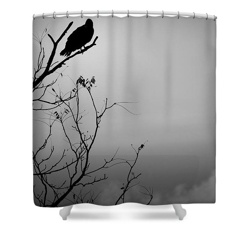 Black Shower Curtain featuring the photograph Black Buzzard 7 by Teresa Mucha