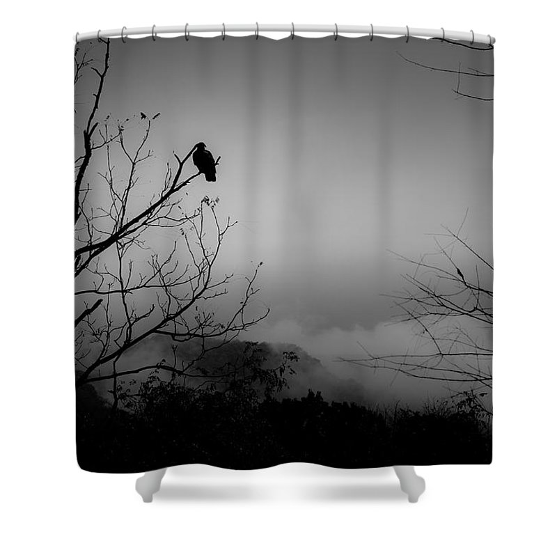 Black Shower Curtain featuring the photograph Black Buzzard 9 by Teresa Mucha