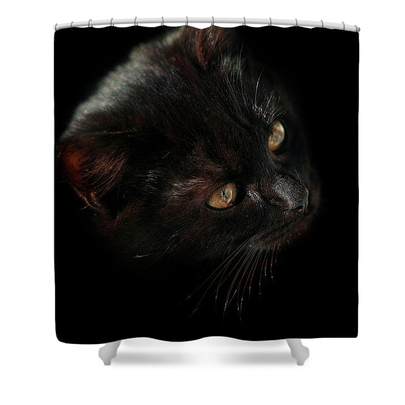 Cat Shower Curtain featuring the photograph Black Cat by Olena Ivanova