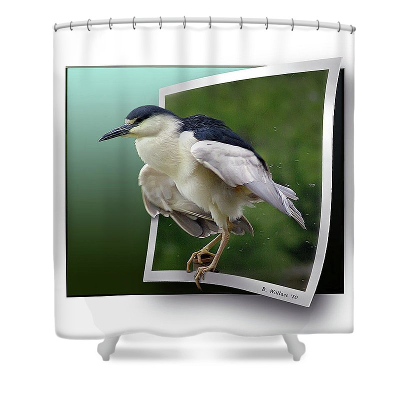 2d Shower Curtain featuring the photograph Black Crowned Night Heron by Brian Wallace