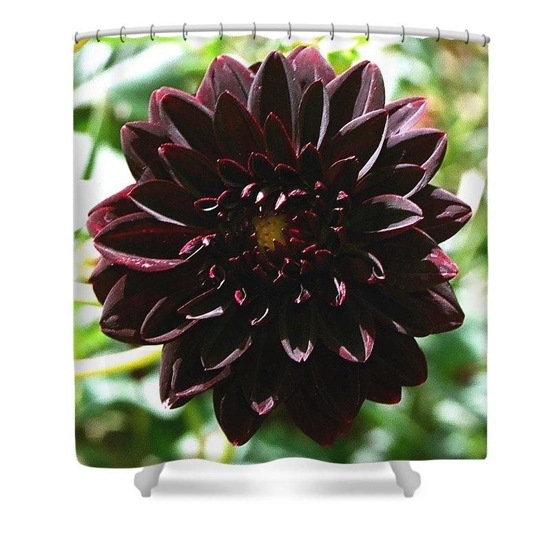 Flower Shower Curtain featuring the photograph Black Dalia by Dean Triolo